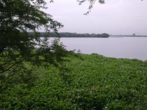 noida-yamuna-river-u-cant-believe-this